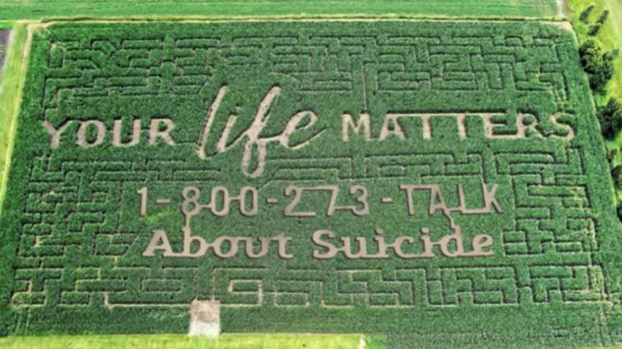 'Your Life Matters': Suicide Prevention Hotline Number Carved Into Family Farm's Corn Maze