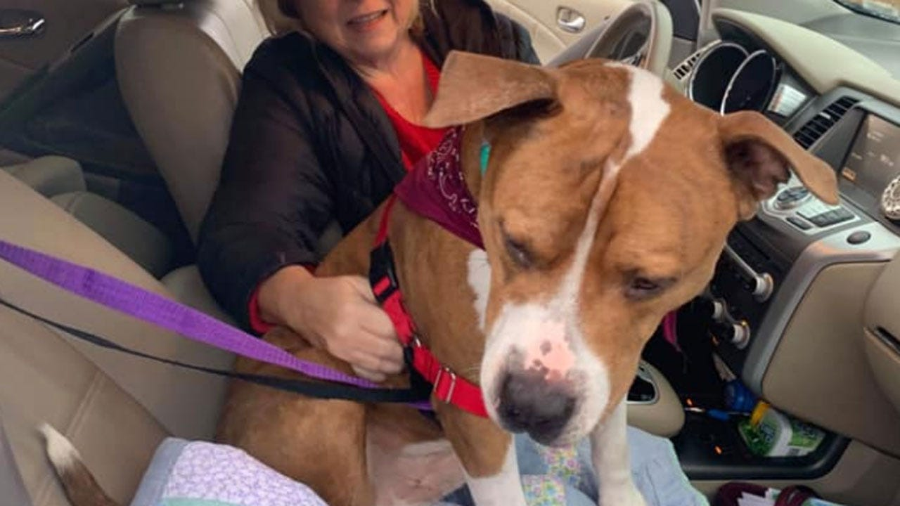 Dog Found Thousands Of Miles Away From Home; Volunteers Help Get Him Back