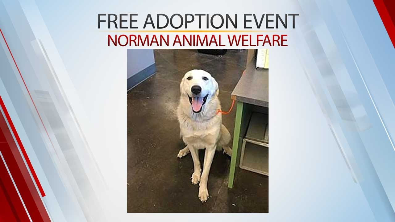Norman Animal Welfare Holds Free Adoption Event Thursday, Friday