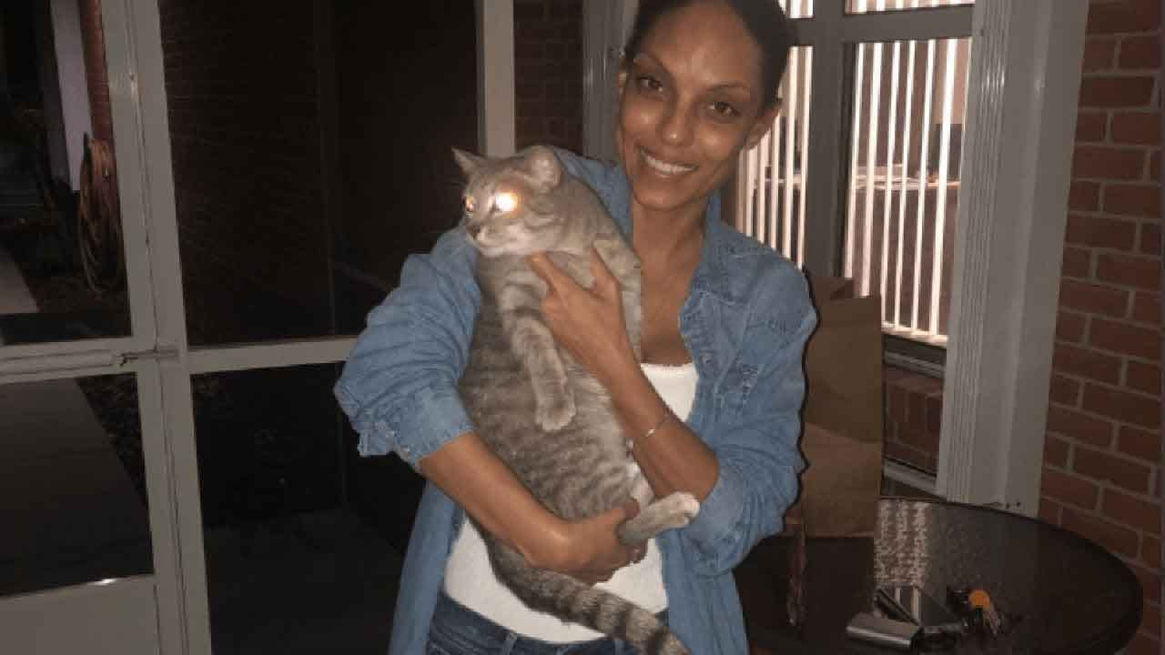 Florida Cat Reunited With Owner 2 Years After Hurricane