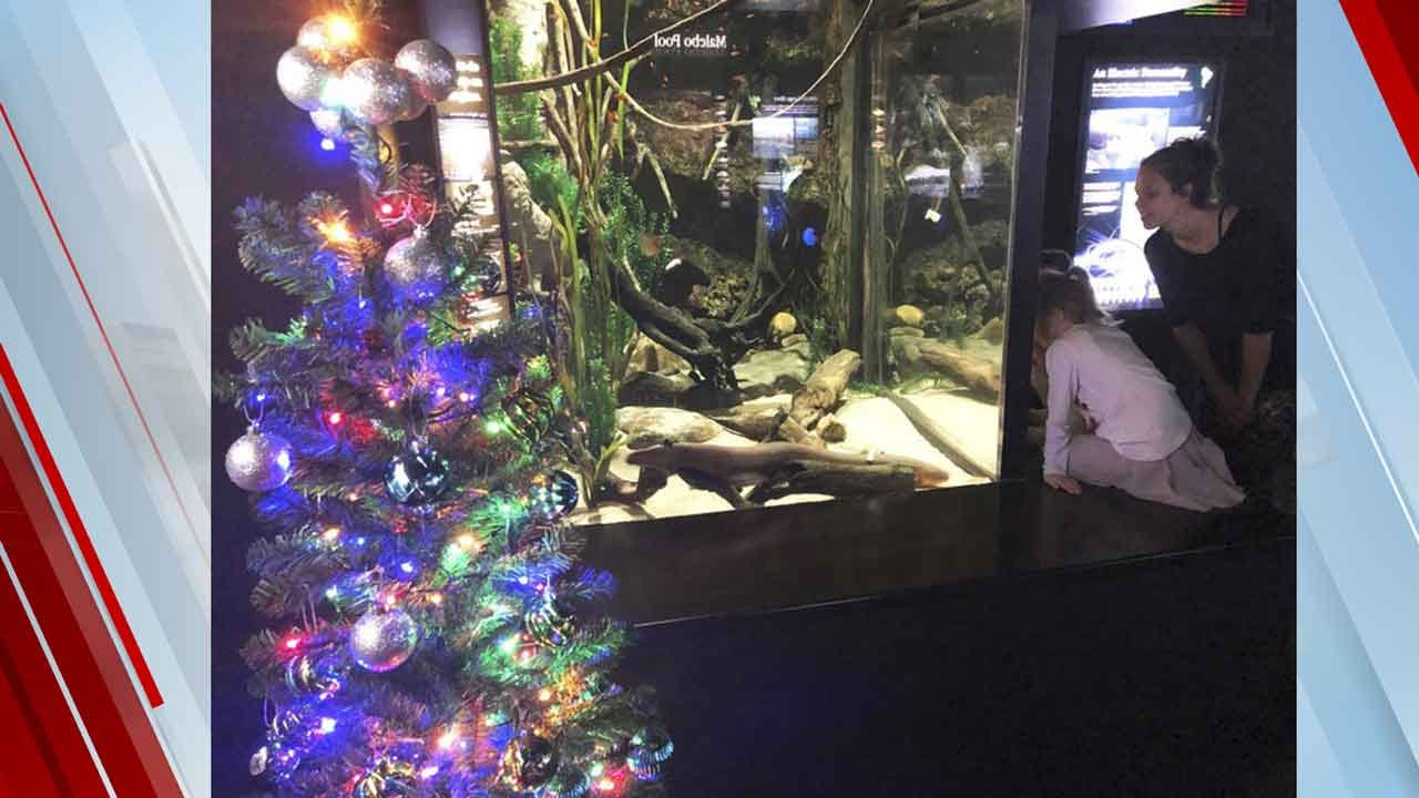 Shocked? Electric Eel Powers Aquarium's Christmas Lights