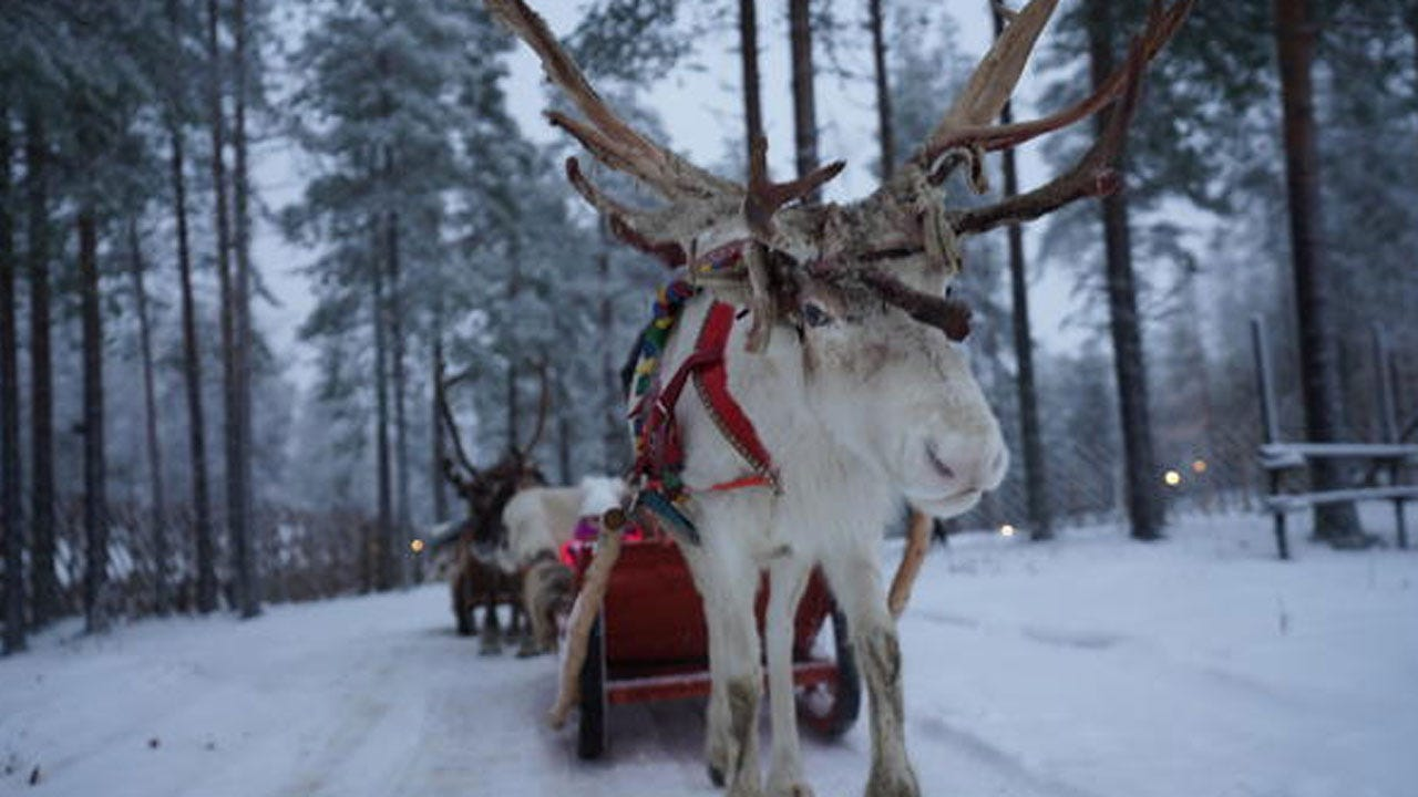 Reindeer Near Santa's Hometown Need Help To Survive Warming Climate