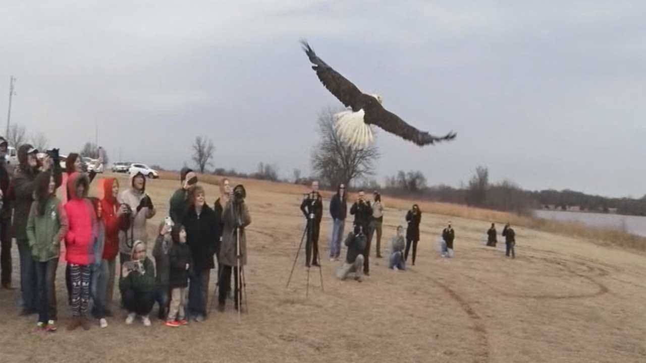 Bald Eagle Rescued By Oklahoma Family Released 4 Months Later