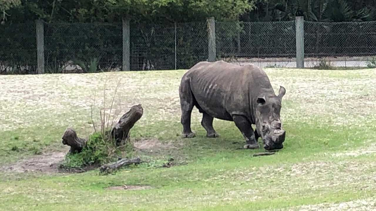 Zookeeper At Jacksonville Zoo Hospitalized After She's Struck By Rhino Horn