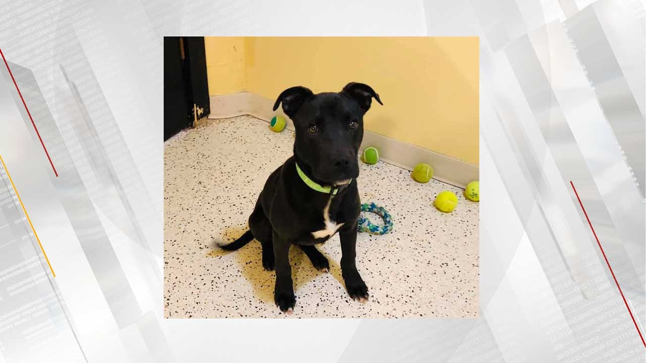 Oklahoma Puppy Survives Euthanization, Gets Adopted