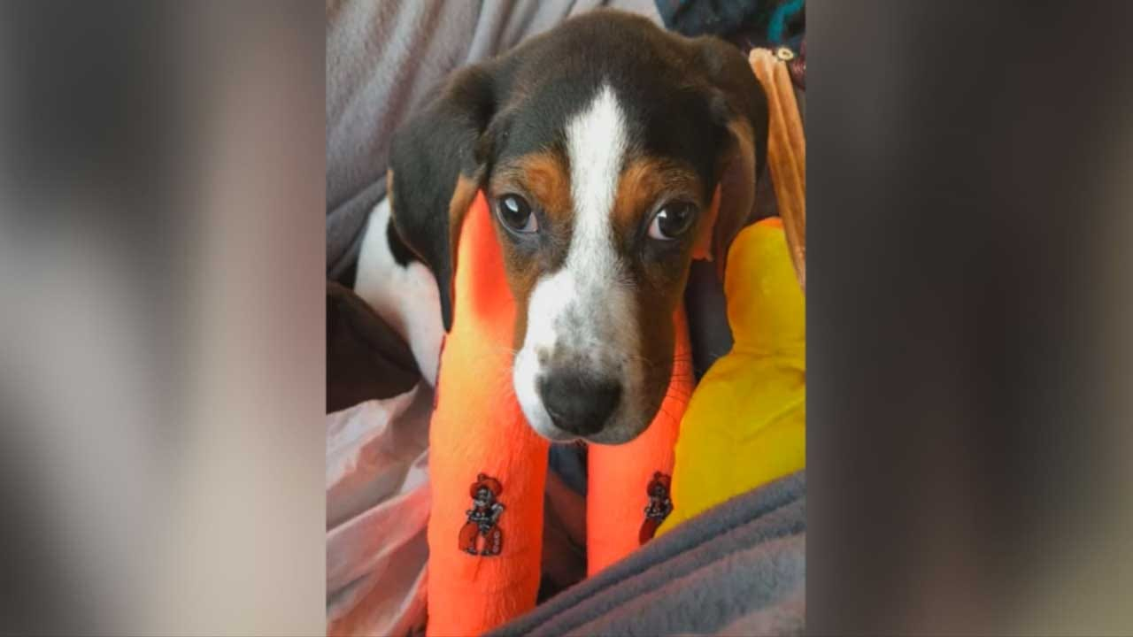 Puppy Born With Upside-Down Paws Doing Well