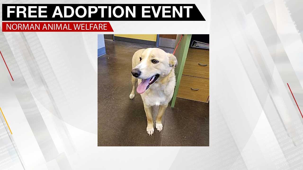 Norman Animal Welfare Holds Free Animal Adoption Event
