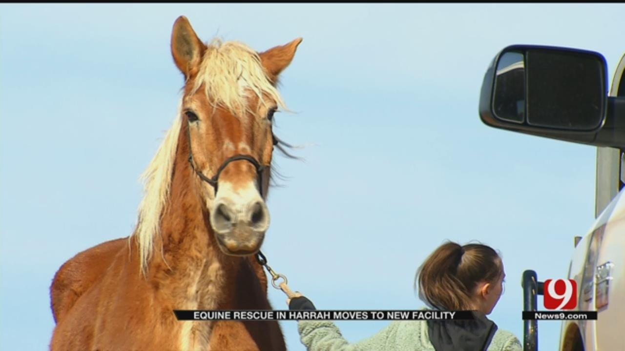 Equine Rescue Moves To New Location In Harrah