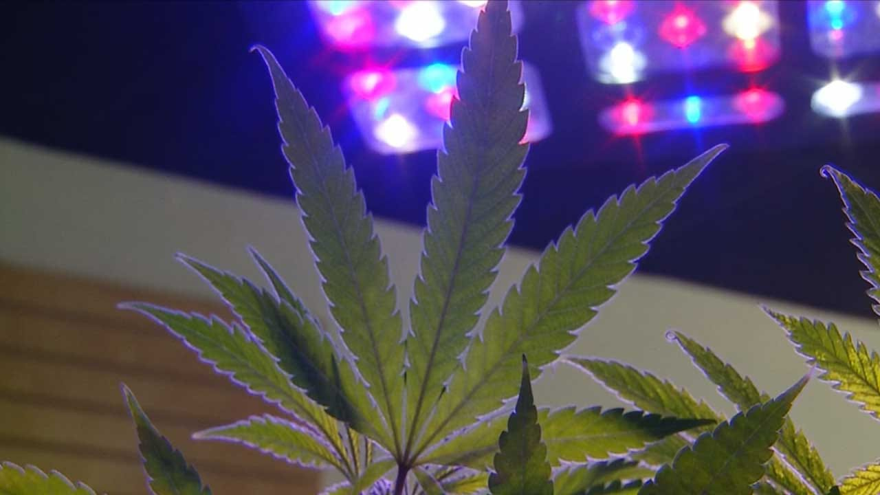 DEA Finds Hundreds Of Pounds Of Illegal Marijuana In Oklahoma Stash Houses; 2 Suspects Named