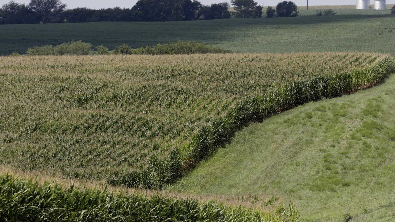 'Corn Sweat' Makes Heat Wave Even More Dangerous