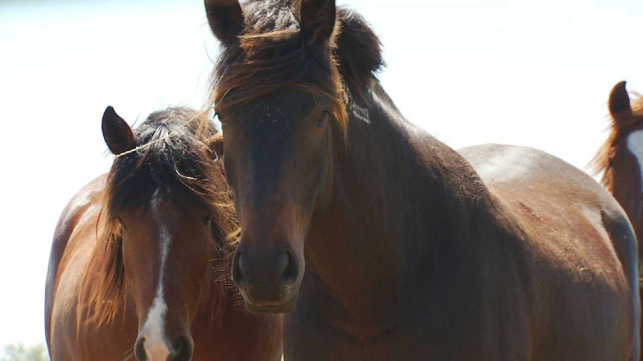 6 More Horses Found Shot To Death In Kentucky, Bringing Total To 21