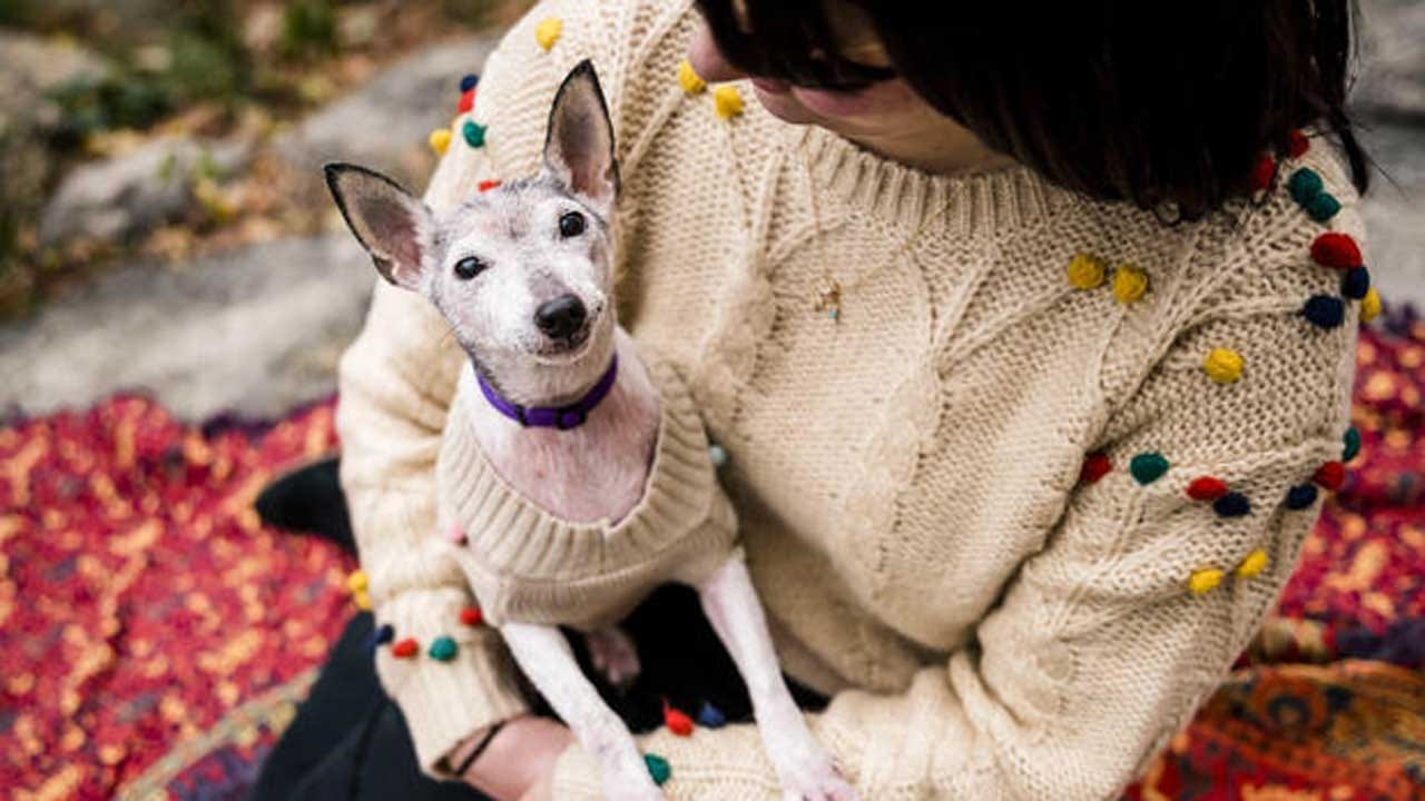 Program Gives Homes To Senior And Terminally Ill Shelter Dogs