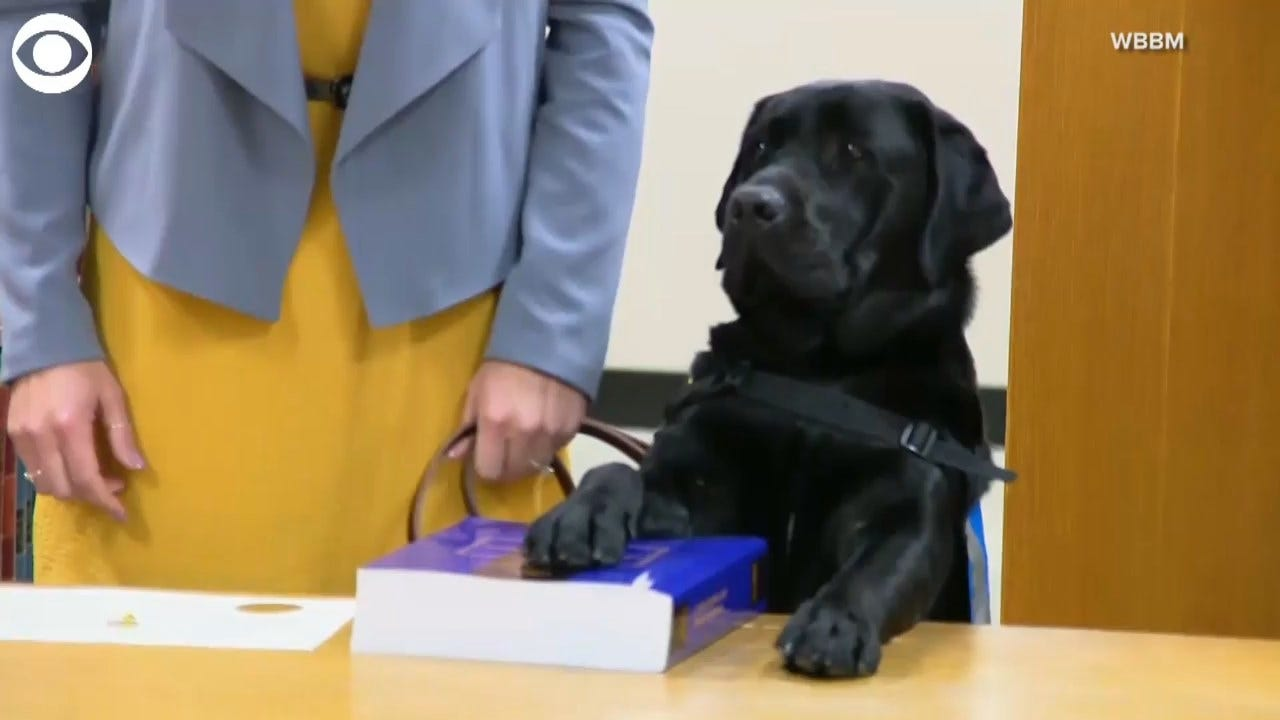 Comfort Dog Sworn In At State's Attorney's Office To Help Victims Of Sexual Assault, Violence