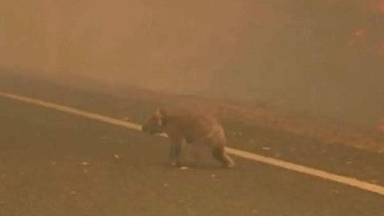 Woman Risks Her Life, Rescue Koala From Fire In Australia