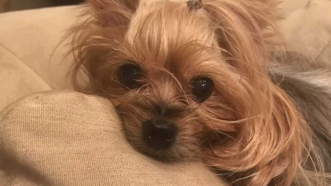 Dog Crushed By Heavy Package Tossed Over Fence By FedEx Driver, Family Says