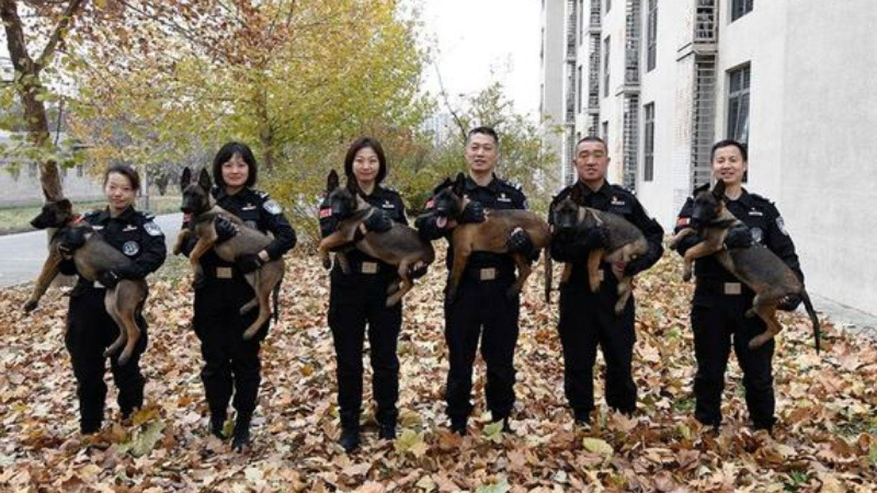 The Newest Members Of Beijing's Police Force Are 6 Cloned K-9s
