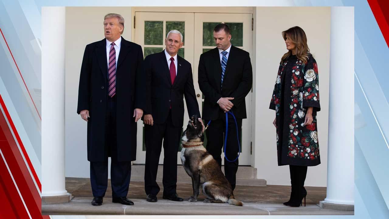 Conan, Hero Dog Injured In Al-Baghdadi Raid, Honored At White House