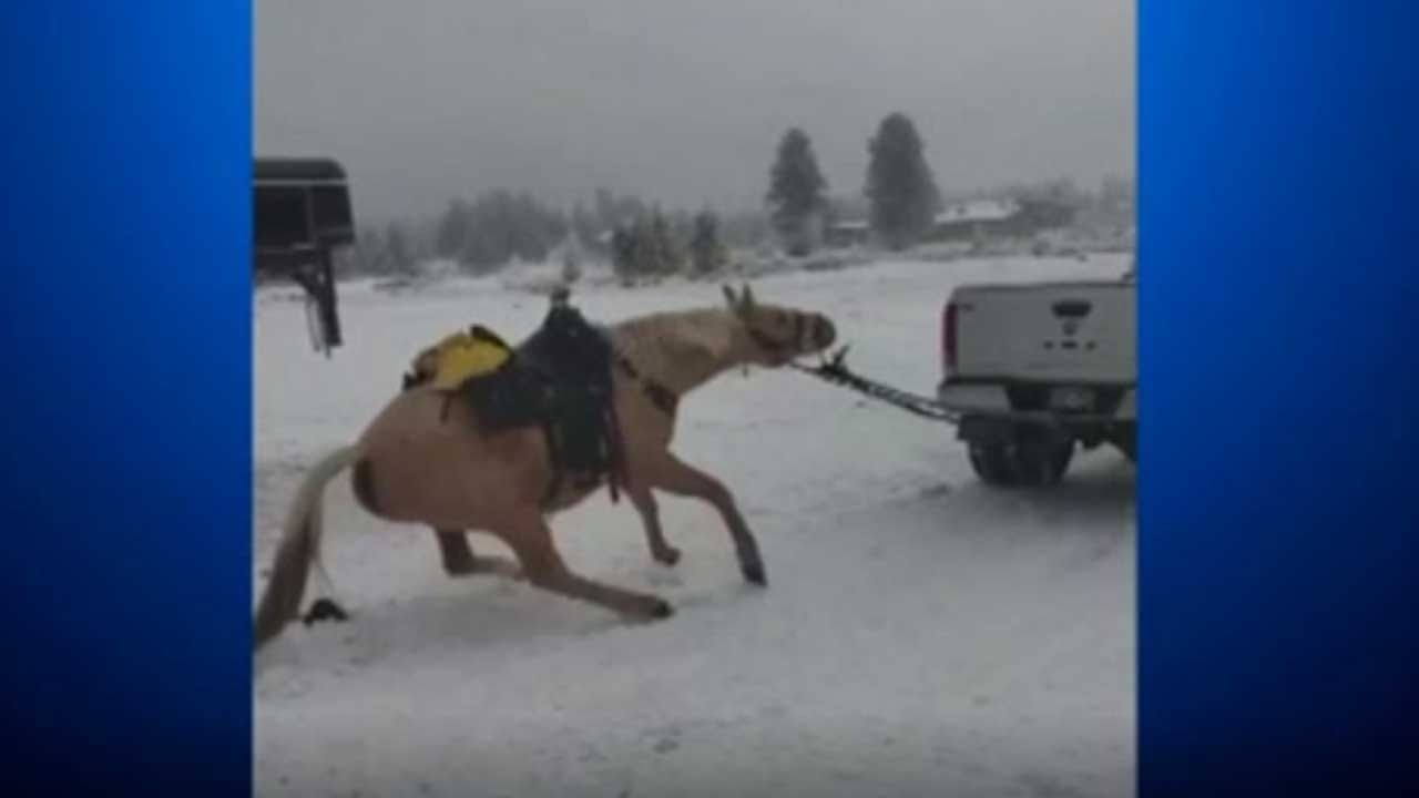 Arrests Made After Video Shows Tied-Up Horse Being Dragged By Truck In Colorado