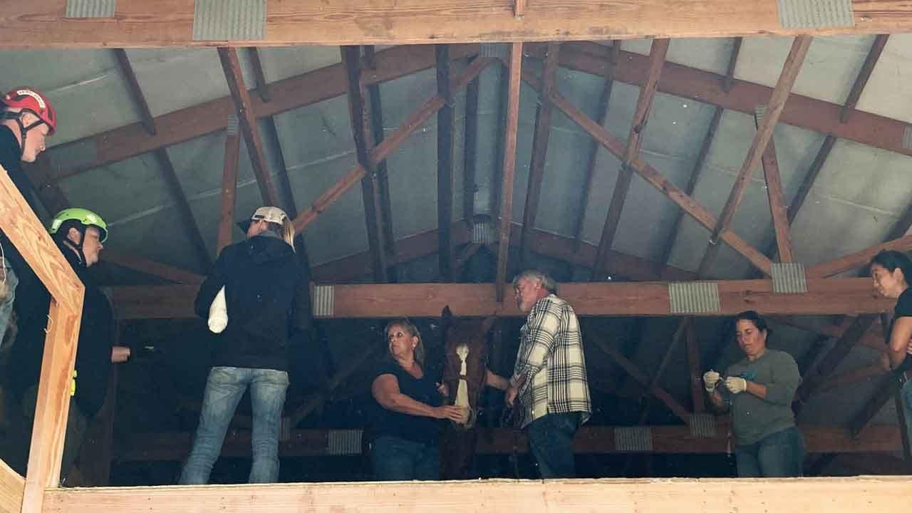 High Horse: Farm Animal Gets Stuck Up In Barn's Hayloft