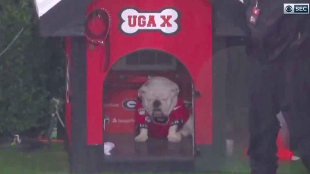 'He Looks Miserable!': PETA Urges University Of Georgia To Retire Uga, School's Mascot