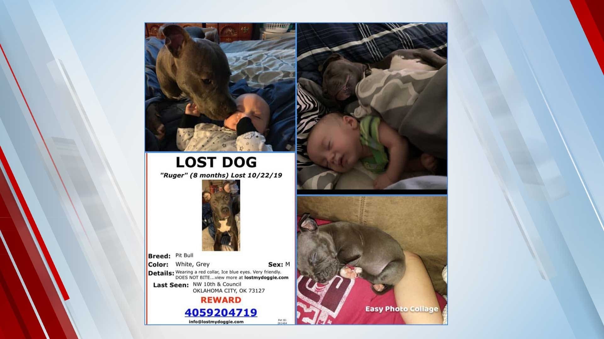 Phone Scammers Targeted OKC Family In Attempt To Get Missing Pet Reward, Woman Says