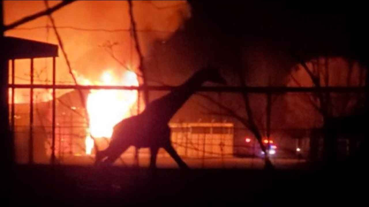 'We Are Devastated': Giraffes Among 10 Animals Killed In Barn Fire At Ohio Wildlife Park