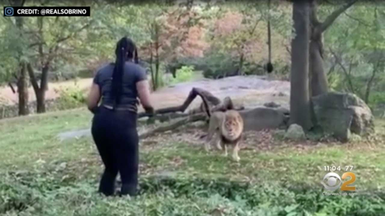 Woman Who Went Viral After Climbing Into The Bronx Zoo Lion Enclosure, Taunting Animals Is Arrested