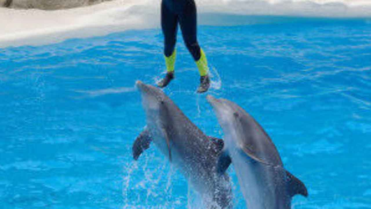 TripAdvisor Won't Sell Tickets To Parks With Captive Whales And Dolphins