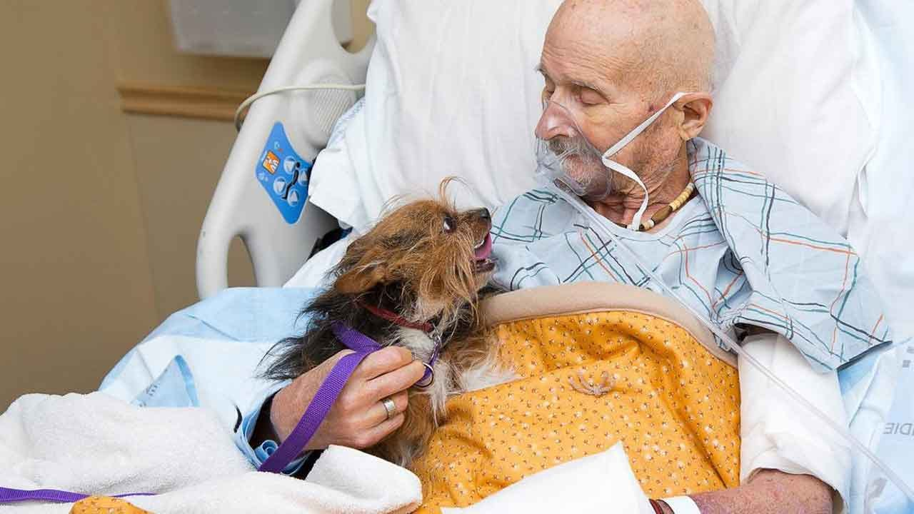 Vietnam Vet Reunited With Beloved Dog In Hospice Care