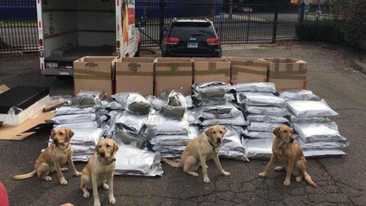 Connecticut Police: 'Big Dogs' Find 420 Pounds Of Marijuana In U-Haul Truck