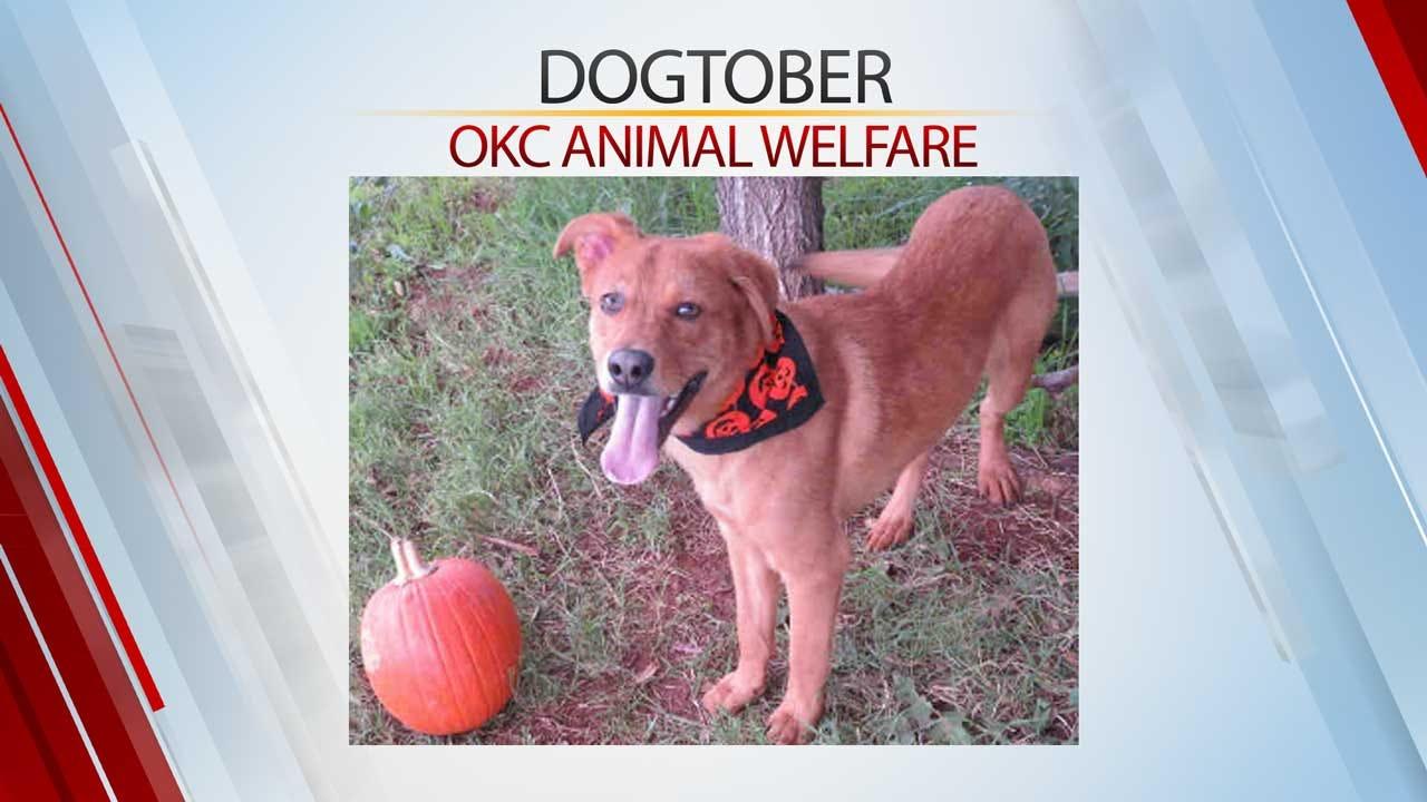 OKC Animal Welfare Celebrates 'Dogtober' With Half-Price Puppy, Dog Adoptions