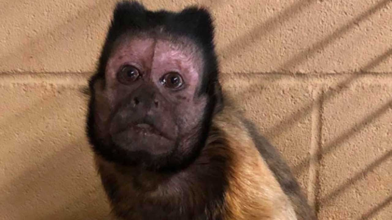 Zoo Monkey Dies From Injuries After Fighting Off Intruder Who Took His Offspring