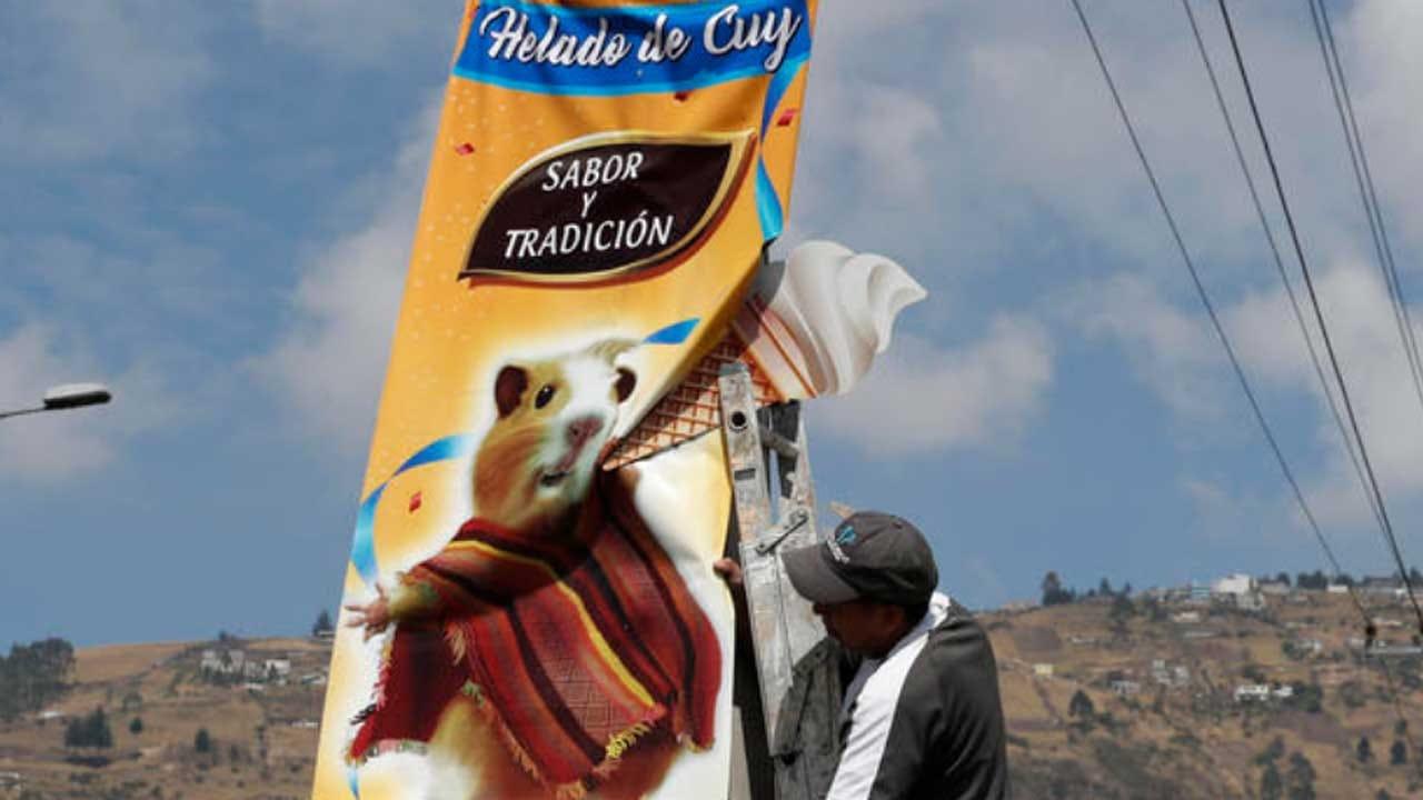 Guinea Pig Ice Cream Proves Popular For A Bolivian Entrepreneur