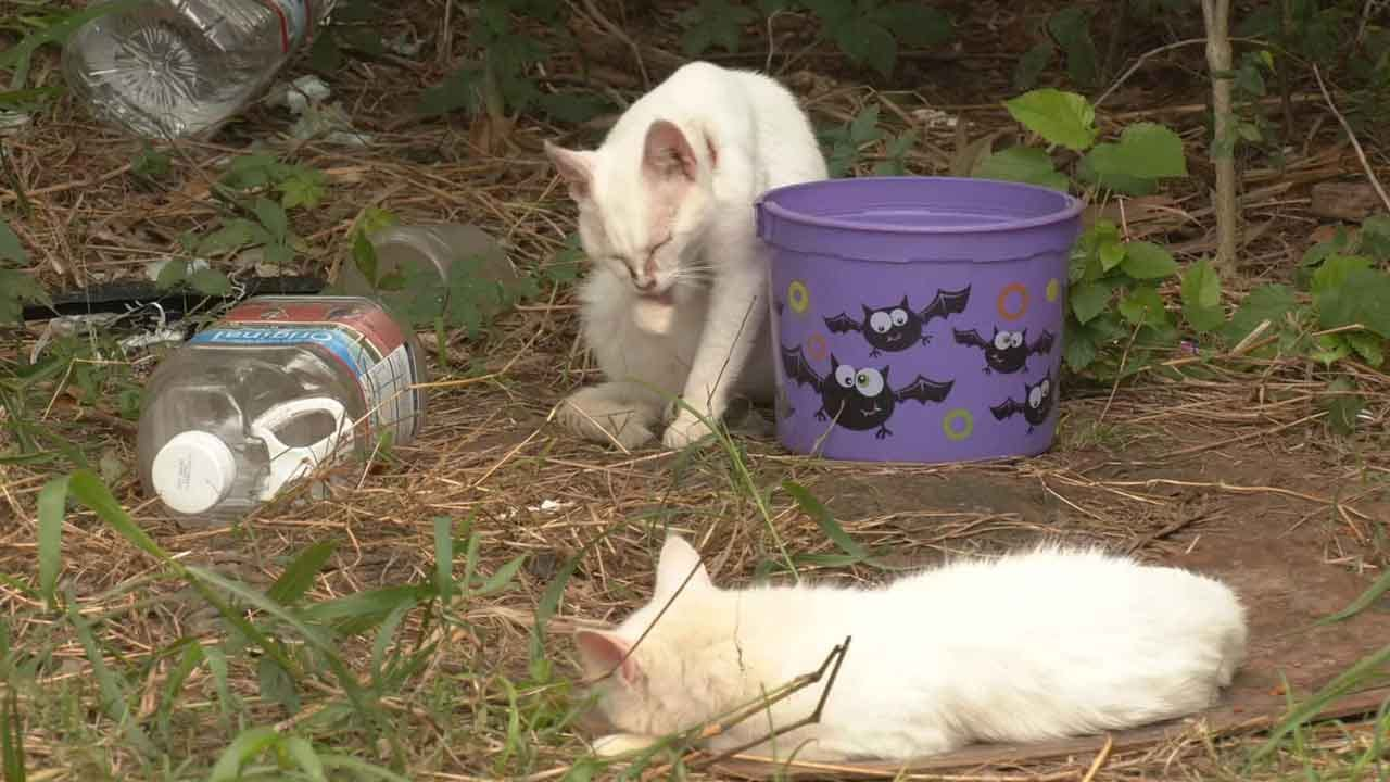 Homes Needed For 85 Cats Found Living In Deplorable Conditions In Shawnee Home