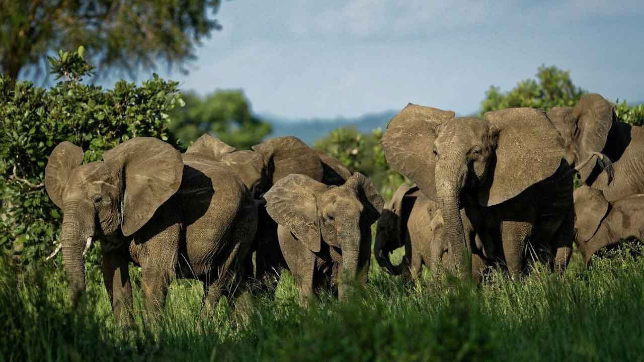 Five Adult Elephants Die After Falling Into Waterfall Trying To Save Calf