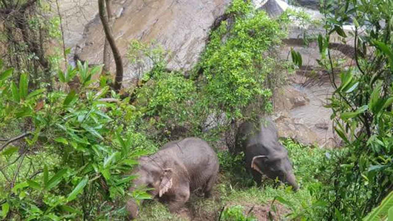 11 Elephants Plunge To Their Deaths At 'Ravine Of Hell' Waterfall In Thailand