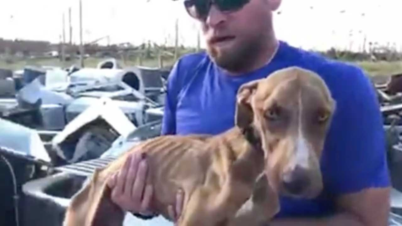 Dog Rescued After Surviving Nearly A Month Pinned Under Rubble From Hurricane Dorian