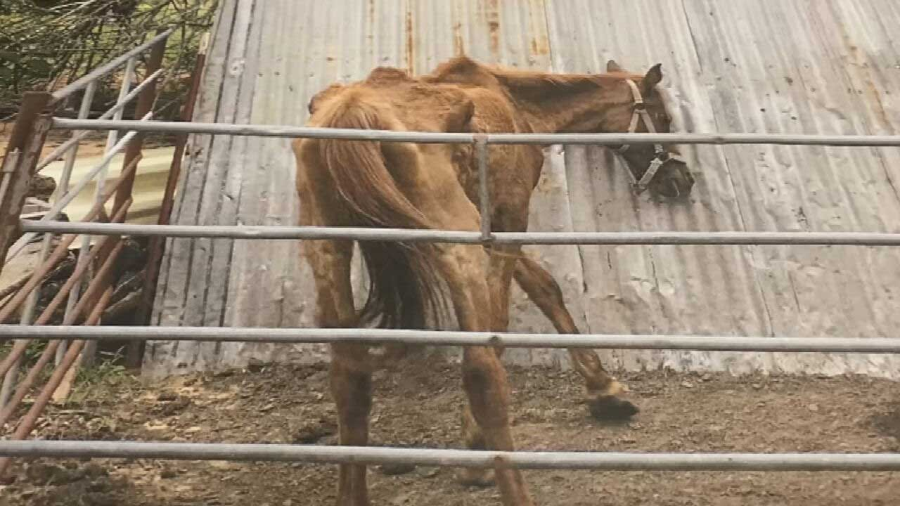 Choctaw Woman Charged With Animal Cruelty After 300 Animals Seized From Property