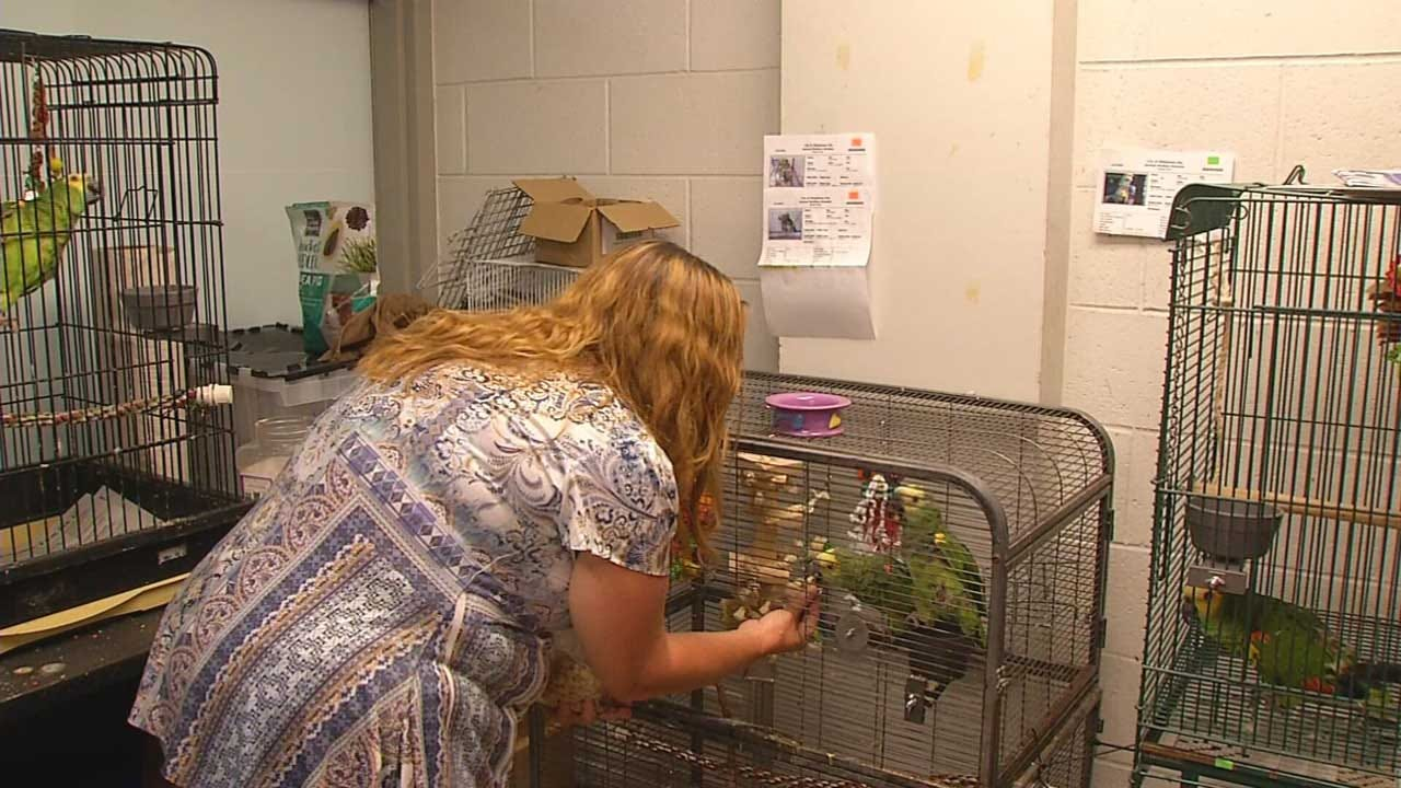 Oklahoma County Judge Rules Animal Control Illegally Seized Exotic Birds From Owner