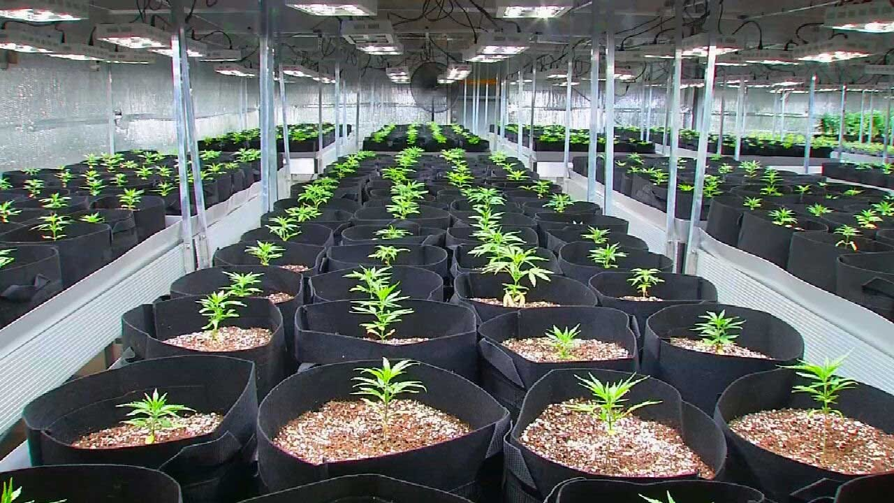 City Of Noble Temporarily Delaying Openings Of New Marijuana Grow Operations