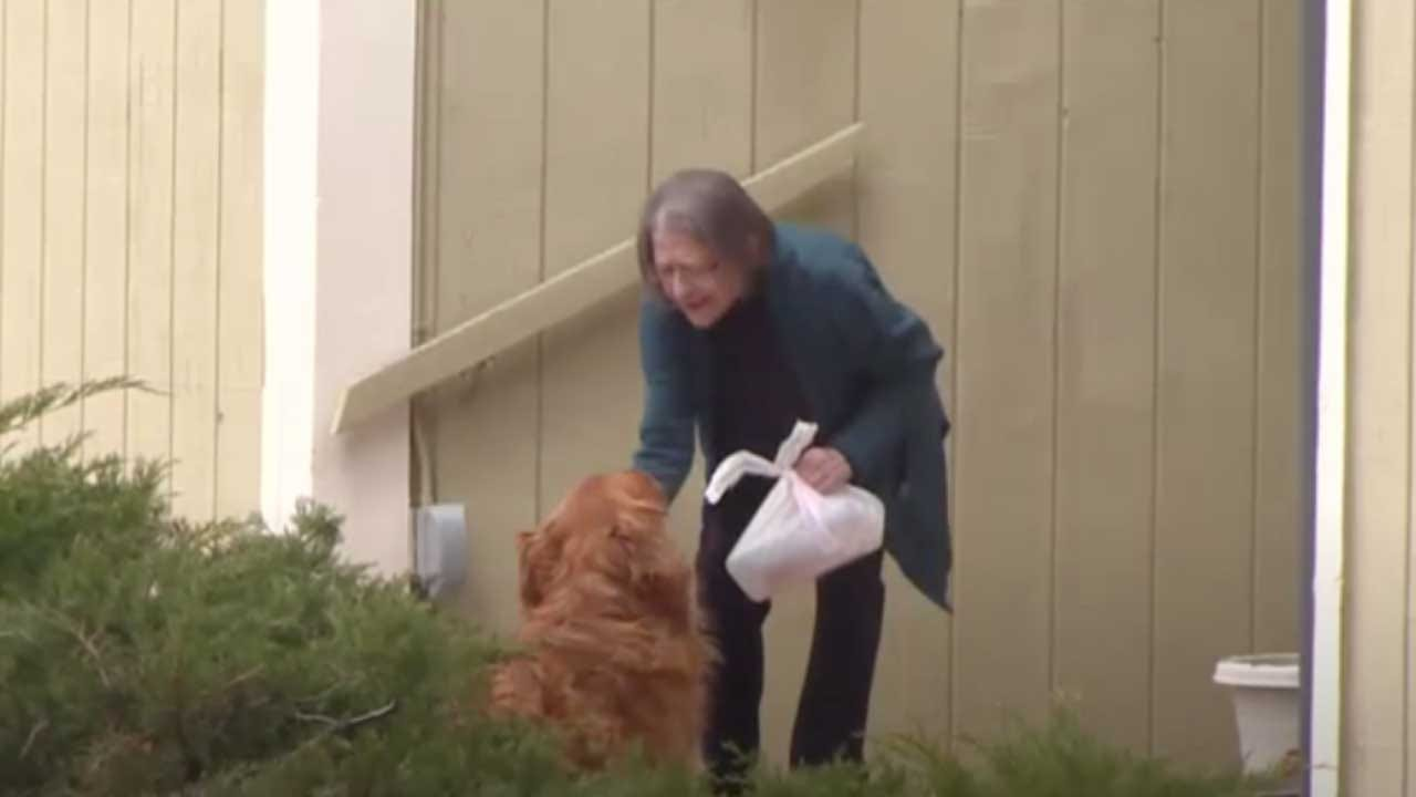 Golden Retriever Helps His Owner Deliver Groceries To Quarantined Neighbor