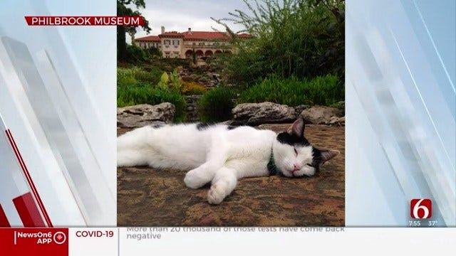 Philbrook Museum Starts New Pen Pal Program For Garden Cats
