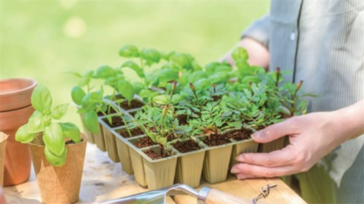 Seed Companies Can't Keep Up As More Americans Turn To Growing Their Own Food