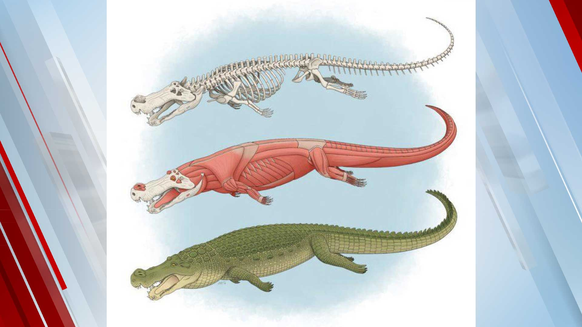 Ancient 'Terror Crocodiles' Used Banana-Sized Teeth To Eat Everything In Sight, Even Dinosaurs