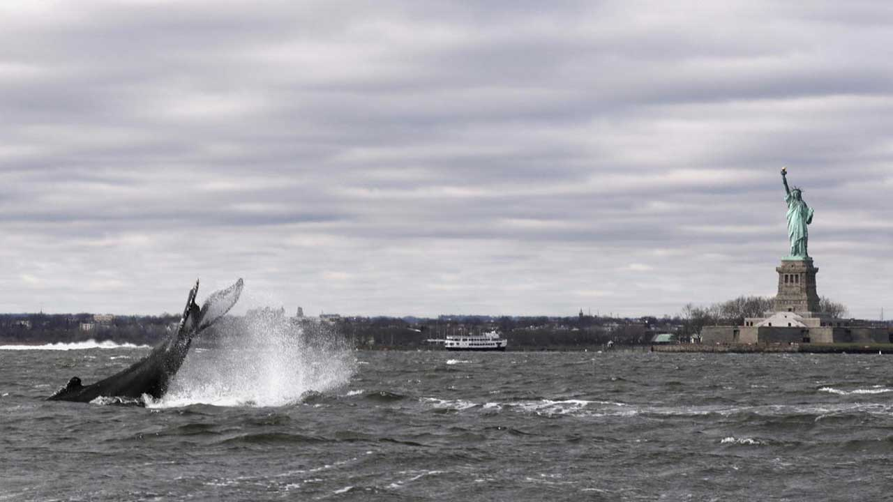 Stunning Images Show Humpback Whale Swimming Close To The Statue Of Liberty
