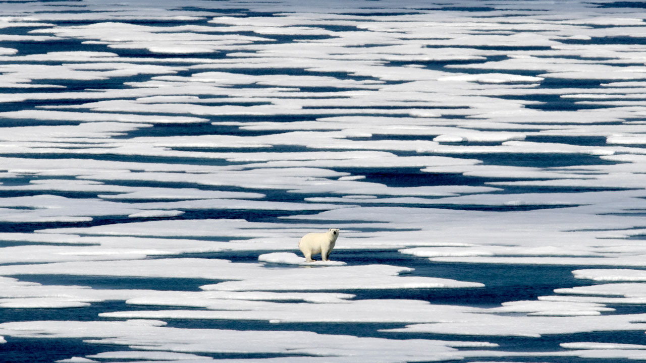 'Alarming' And 'Extraordinary' Rate Of Change As The Arctic Warms, NOAA Report Says