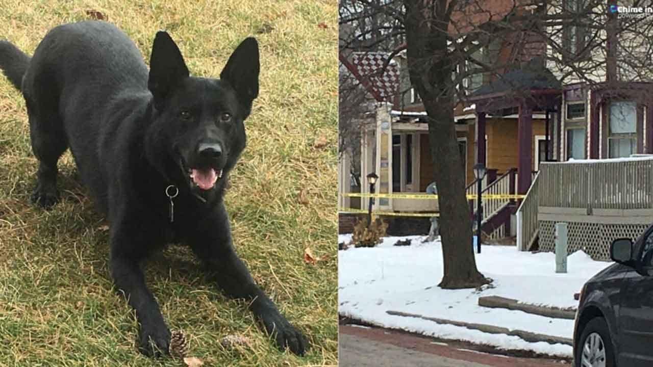 Michigan Police Fatally Shoot Man Who Stabbed Police Dog