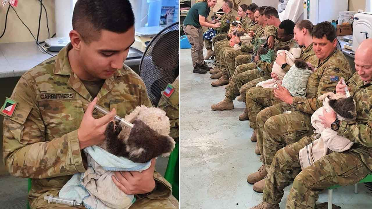 Australian Soldiers Spend Their Downtime Caring For Koalas Rescued From The Bushfires