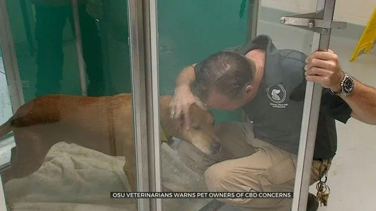 OSU Veterinarians Warn Pet Owners Of CBD Concerns