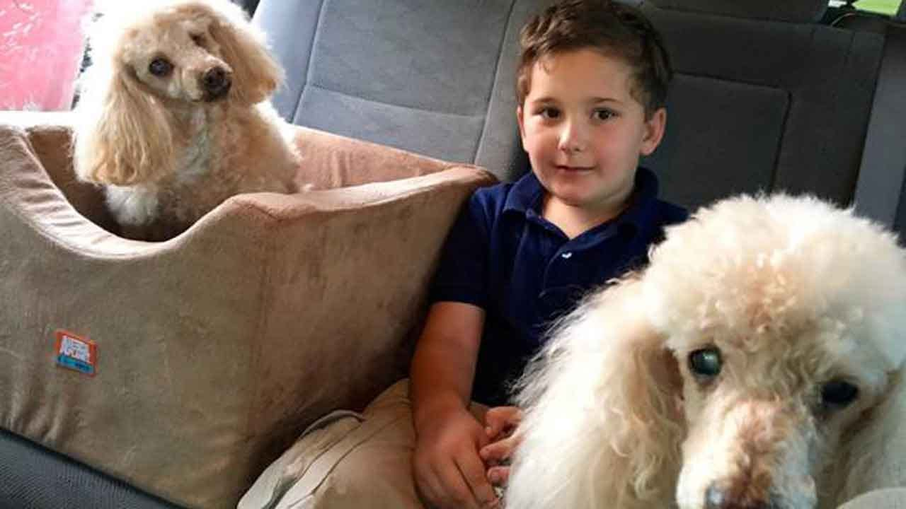 Adopted Boy Is On A Mission To Save Old Dogs Who Need A Home: 'I Know How It Feels Not To Be Loved'